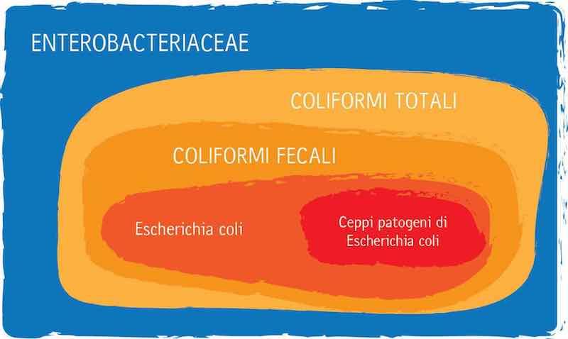Rappresentazione a insiemi dei Coliformi. Famiglia Enterobacteriaceae, Coliformi Totali, Coliformi Fecali, Escherichia coli, Ceppi patogeni di Escherichia coli